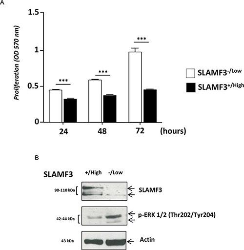 Hepatocyte SLAMF3 forced expression decreased HCC cells proliferation.