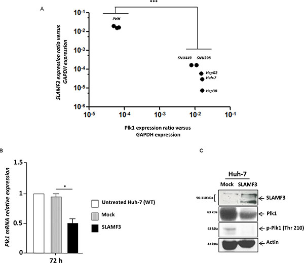 Restoration of SLAMF3 high expression in HCC cells inhibits PLK1 expression and activation.