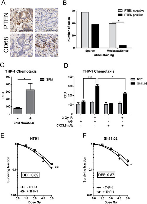 CXCL8 induces chemotaxis of radioresistance-promoting macrophages in a PTEN-deficient setting.