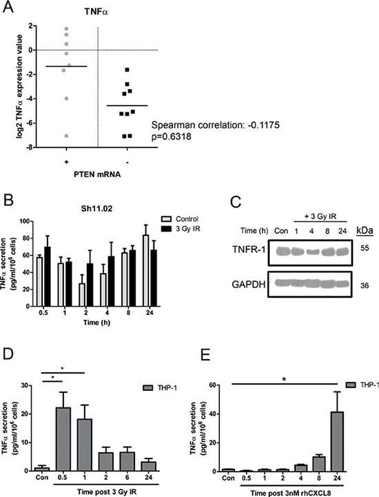 Impact of ionizing radiation and PTEN-status on TNF-α signaling in prostate cancer and THP-1 cell lines.