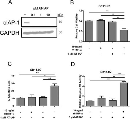 Impact of AT-IAP on cIAP-1 expression and DU145 Sh11.02 cell viability.