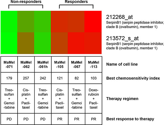 SERPINB1 gene expression is upregulated in melanoma cell lines derived from clinical responders to chemotherapy as compared to cell lines derived from non-responders.