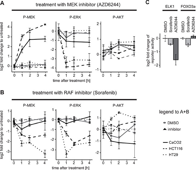 Downregulation of AKT activity and downstream targets after application of the RAF inhibitor Sorafenib in KRAS/BRAF wildtype cells.