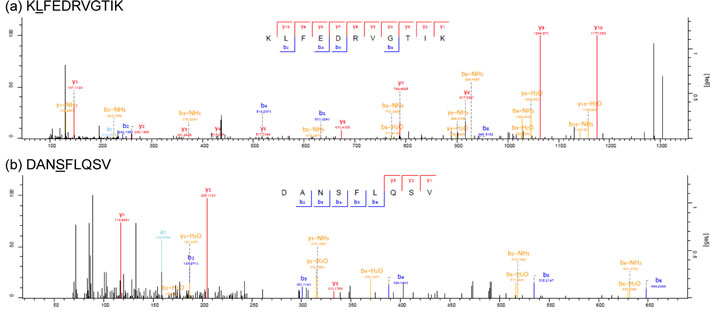 Tandem mass spectra of endogenous mutant peptides identified in 12T.
