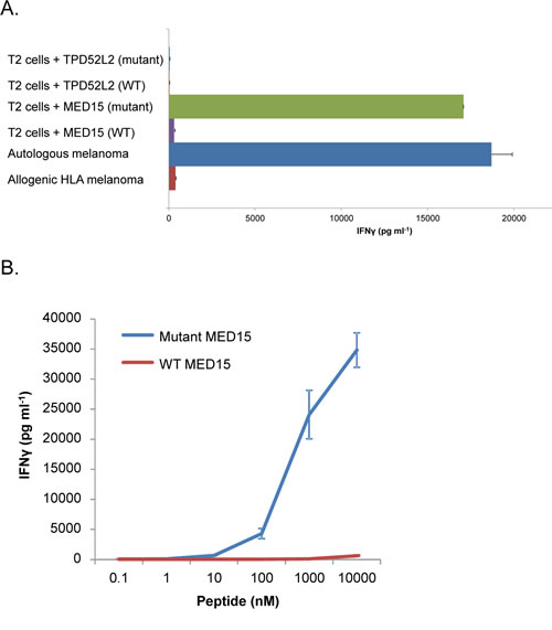 Response of the TILs to MED15 and TPD52L2 mutant and wild-type peptides in the context of HLA-B*51.