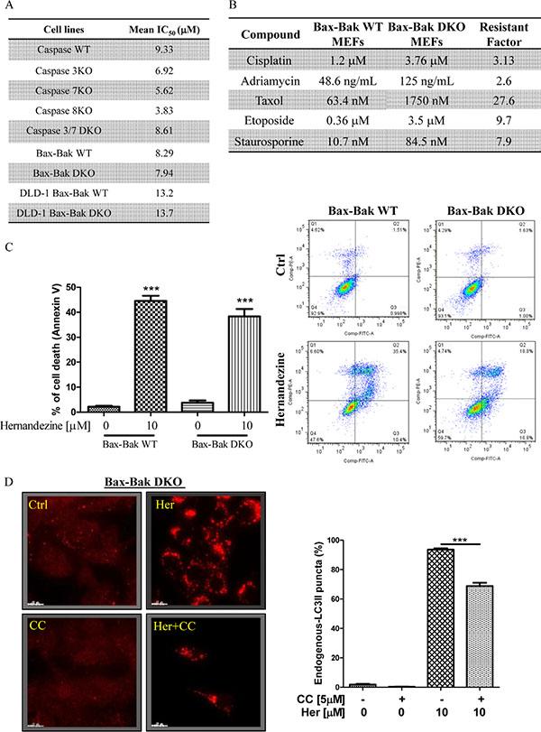 Hernandezine exhibited potent cytotoxicity in apoptosis-resistant cells via autophagy induction.