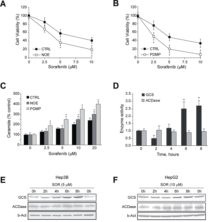 GCS is activated by sorafenib and GCS inhibition increases sorafenib toxicity in hepatoma cells.