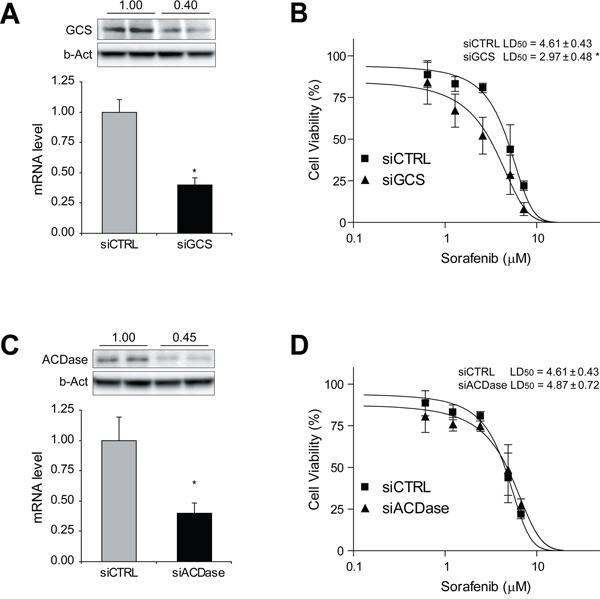 GCS silencing sensitizes hepatoma cells against sorafenib exposure.