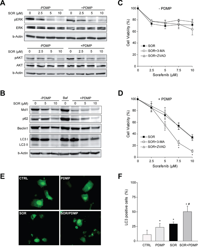 Signaling changes after GCS inhibition in sorafenib treated hepatoma cells.