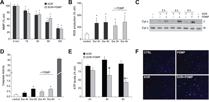 GCS inhibition induces cytochrome c release and ATP depletion to sorafenib-treated hepatoma cells.