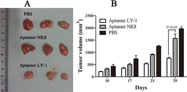 Aptamer LY-1 suppresses tumor growth in a xenograft model of HCC.