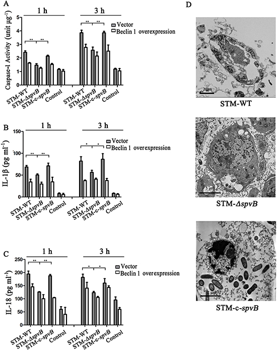 spvB resulted in pyroptosis of J774A. 1 cells.