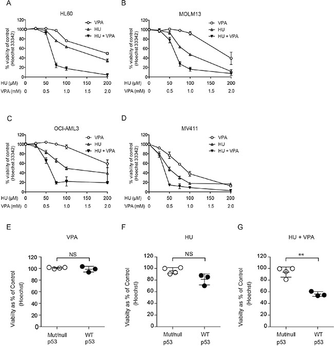 Assessment of cell death induction and the enhanced potential of combining HU and VPA in AML cell lines.