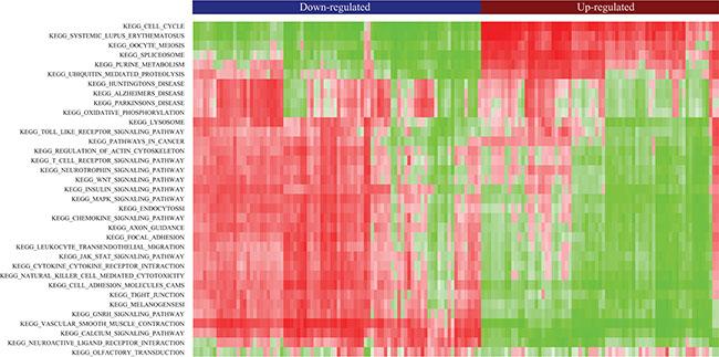 Heatmap of clustered pathway enrichment scores for common DE-lncRNAs.