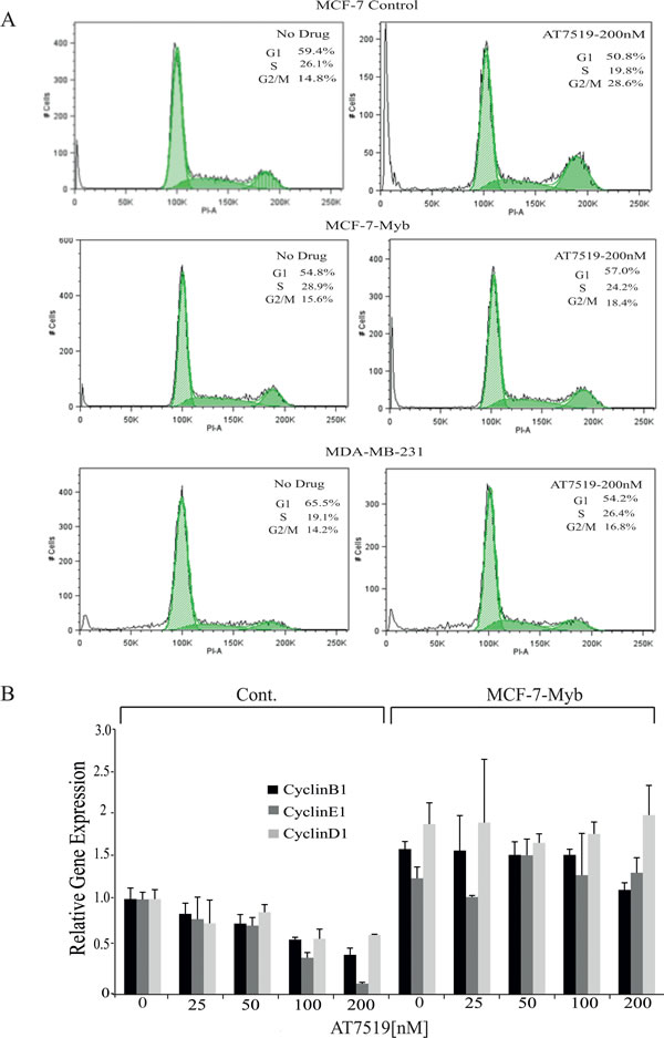 MYB target gene expression in and cell cycle analysis of MCF-7 cells with or without ectopic MYB expression.