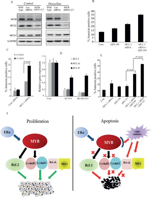 Maximal apoptosis induction in MCF-7 cells requires inhibition of the MYB - BCL-2 axis, MCL-1 and BCL-xL.