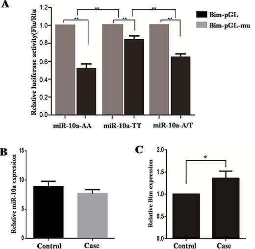 Impact of SNP on miR-10a target genes and the expression of miR-10a and Bim in human decidual tissues.