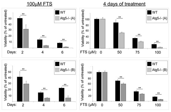 FTS treatment reduces numbers of Atg5