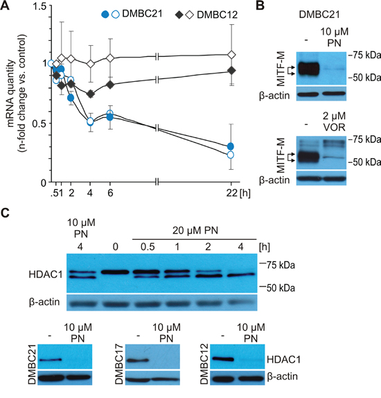 MITF level in melanoma cells might be reduced via inhibition of HDAC1 activity.