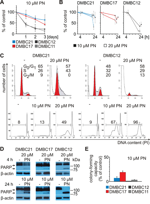 PN induces diverse cellular effects in different melanoma cell populations.