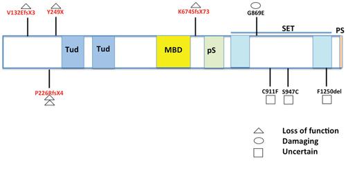 Map of SETDB1 mutations identified in MPMs.