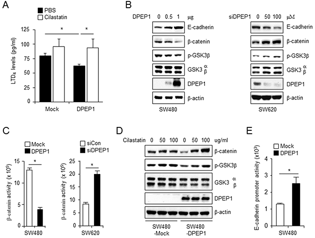 DPEP1 increases E-cadherin expression through inhibition of LTD4 signaling pathway.