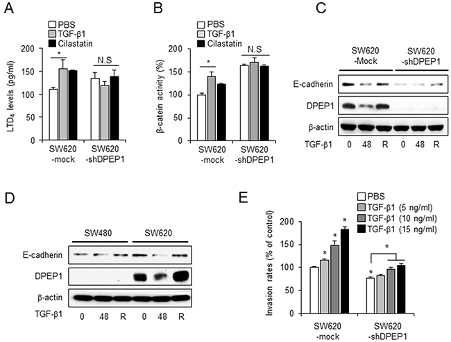 DPEP1 regulates E-cadherin plasticity in TGF-β-mediated EMT.