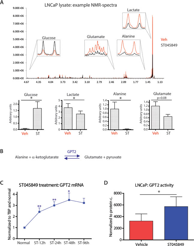 Effects of OGT inhibitor ST045849 on the levels of intracellular metabolites and enzyme activity.