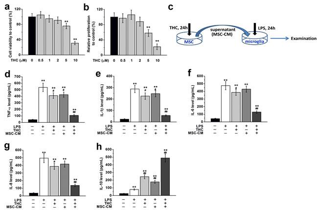 THC treatment affects viability, proliferation and immunomodulatory effects of BM-MSCs.