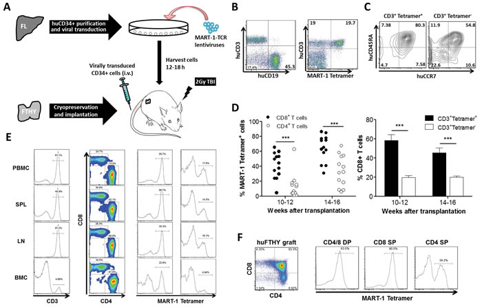 Generation of MART-1-specific T cells in humanized mice made by transplantation of human FTHY and TCR-engineered CD34