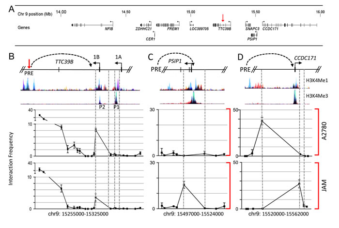 Chromatin interactions at 9p22 in ovarian cancer cell lines.