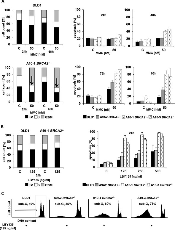 TRAIL-R stimulation causes early onset of apoptosis without concomitant cell cycle arrest in BRCA2−/− cells.