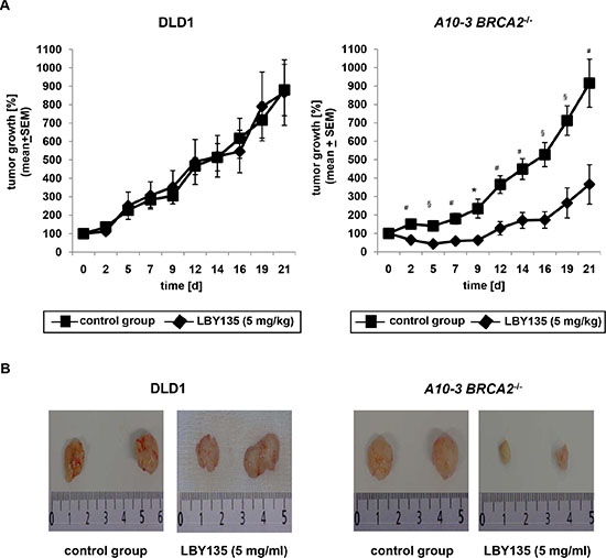BRCA2-deficiency delays tumor growth upon administration of LBY135 in a murine tumor xenograft model in vivo.