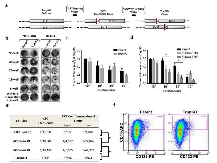 The amino terminus of Ki-67 containing a FHA domain can regulate the cancer stem cell compartment.