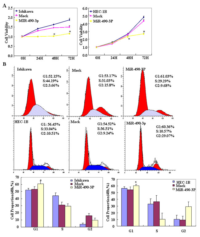 Following miR-490-3p transfection, HEC-1B, Ishikawa cell lines exhibited significantly slower growth (*