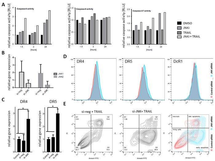 siRNA JNK interference sensitized L3.6pl to apoptosis.