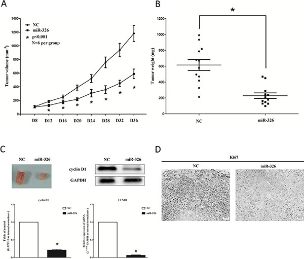 Ectopic expression of miR-326 suppresses tumor growth in vivo.