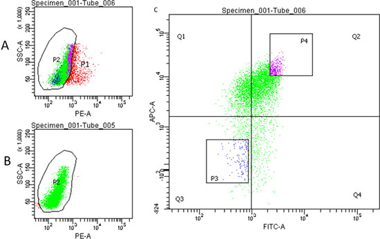 Flow cytometry sorting of HCT-116 cells.