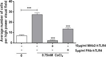 Anti-TLR4 neutralising antibodies inhibit cobalt-mediated neutrophil chemotaxis.