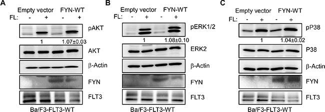 FYN expression slightly increased AKT, ERK1/2 and p38 phosphorylation.