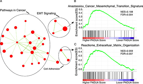 Gene set enrichment analysis (GSEA) delineates biological pathways and processes that correlations with PADUA score.