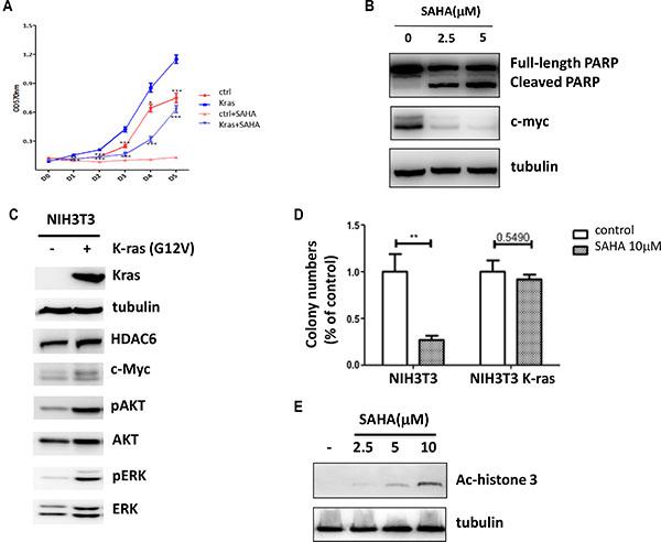 Oncogenic K-ras confers SAHA resistance.