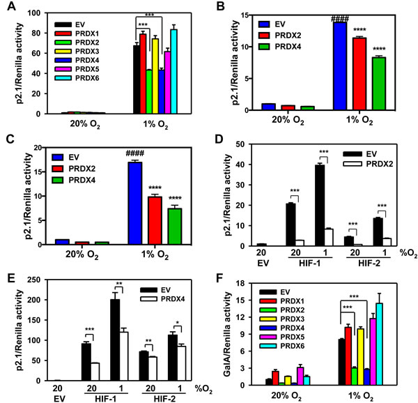 PRDX2 and PRDX4 inhibit the transcriptional activity of HIF-1 and HIF-2.