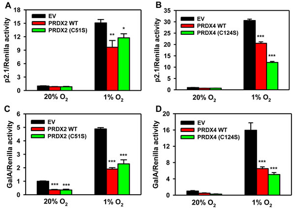 Catalytic activity of PRDX2 and PRDX4 is dispensable for HIF inhibition.