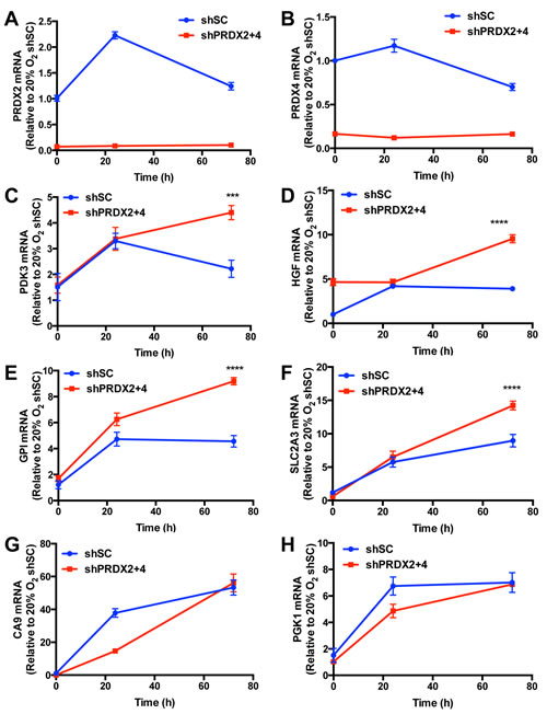 PRDX2 and PRDX4 inhibit the expression of a subset of HIF target genes.