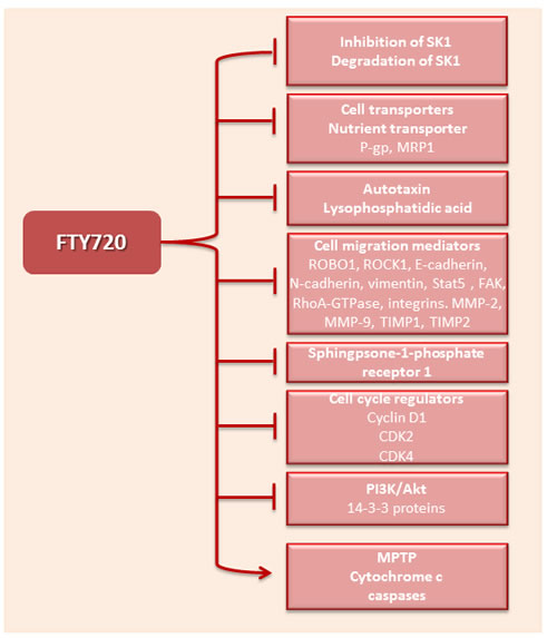 Molecular targets of FTY720.