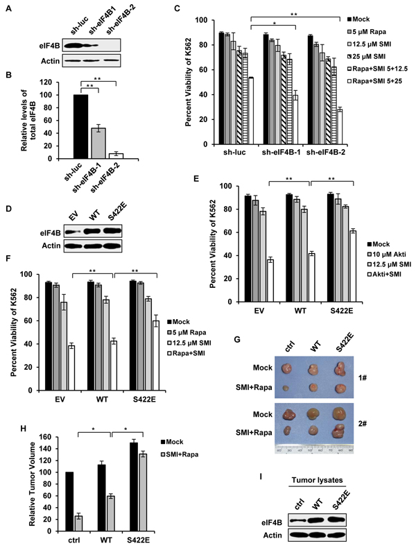 Altered phosphorylation of eIF4B on Ser422 is responsible for synergic inhibition of cell survival by combined blockage of Pim and PI3K/Akt/mTOR pathways.