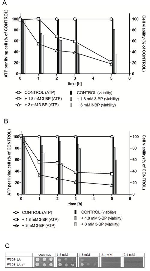 Intracellular ATP levels and viability in the parental wild type W303-1A A. and W303-1A rho0 mutant B. strains are decreased under 3-BP treatment.</b>