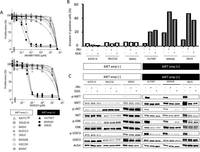 Effects of MET-TKIs in human gastric cancer cell lines classified according to