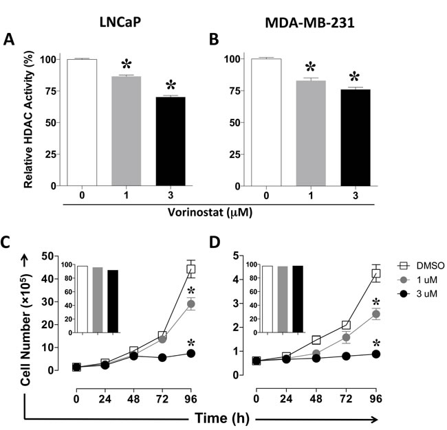 Vorinostat decreases pan-HDAC activity and proliferation of human carcinoma cells in an exposure-dependent manner.